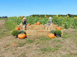 pumpkin-patch-300x224